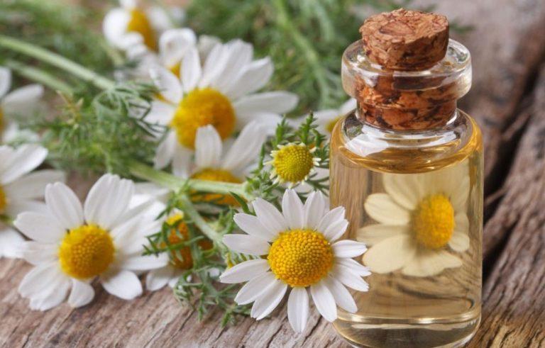 ۷ گیاه معجزهگر برای درمان سریع ریزش شدید مو زنان و مردان