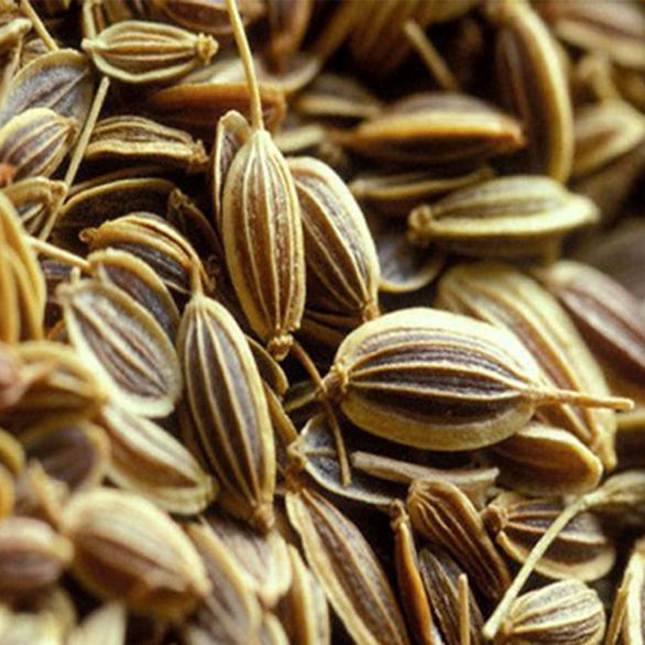 گیاه زنیان + خواص و مضرات مصرف