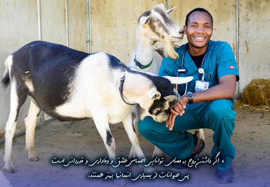 عکس نوشته جدید تبریک روز دامپزشک