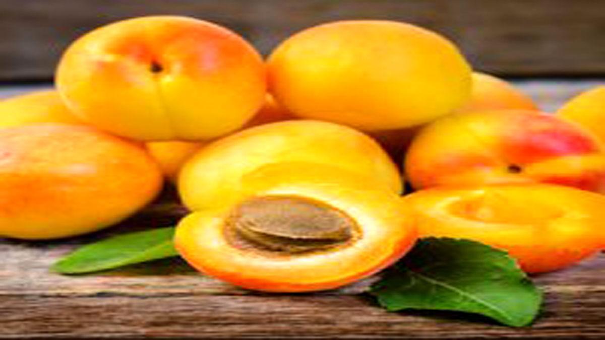 مرگ حتمی انسان با خوردن هسته این میوه