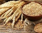 قیمت بازارهای جهانی گندم و ذرت کاهش یافت