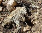 عکس تلخ از مرگ حیوانات وحشی + تصاویر