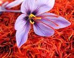راه اندازی معاملات آتی زعفران به سود کشاورزان است