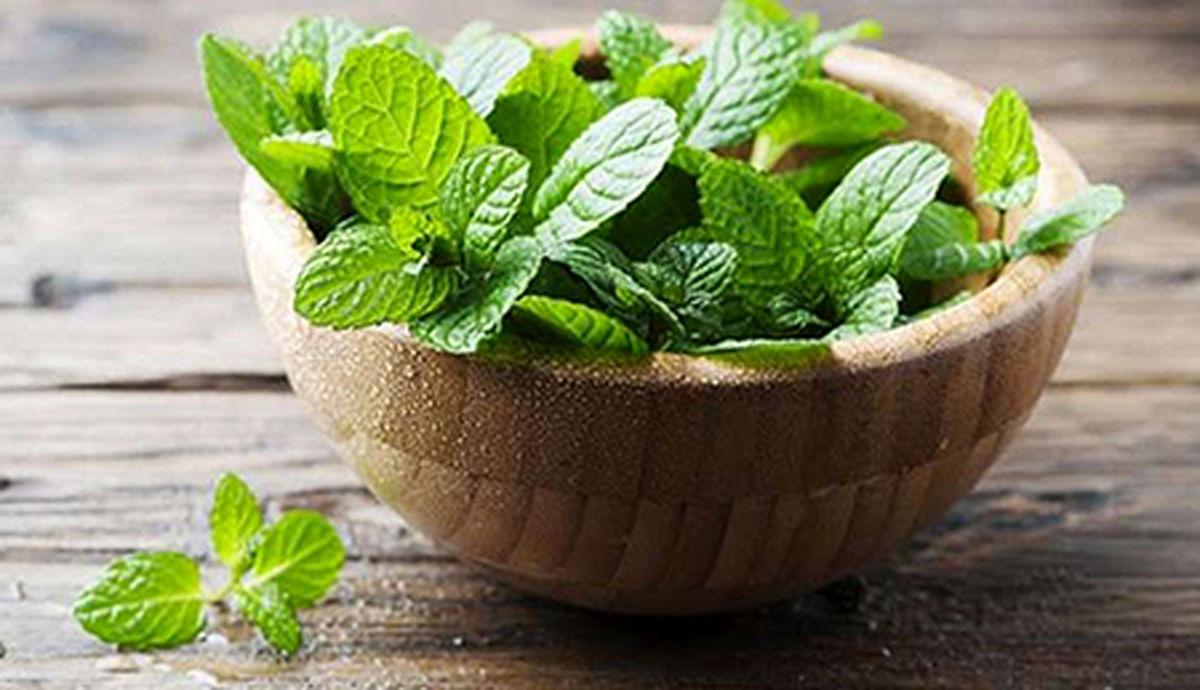 خواص گیاه شگفت انگیزی که دردهای عصبی شما را تسکین می دهد