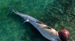 پیگیری مرگ نهنگها در دستور کار منطقه آزاد کیش