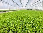 حمایت 11 میلیاردی بانک کشاورزی از راه اندازی مجموعه تولیدی ایران نشاء در البرز