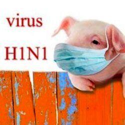 با آنفلوآنزای خوکی بیشتر آشنا شوید