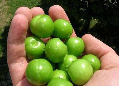 گوجه سبز هم قیمت طلا شد !