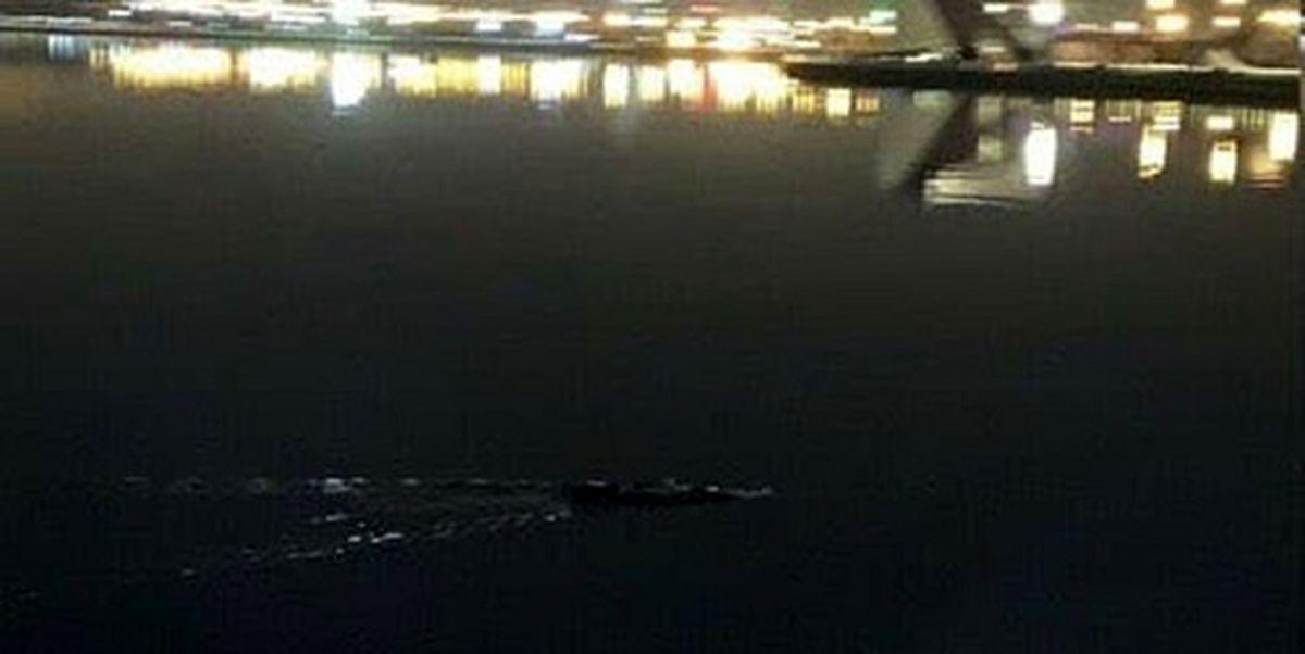 وجود تمساح در دریاچه چیتگر تکذیب شد
