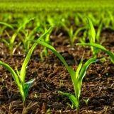 پرداخت ۱۹ هزار میلیارد ریال غرامت به کشاورزان سیل زده