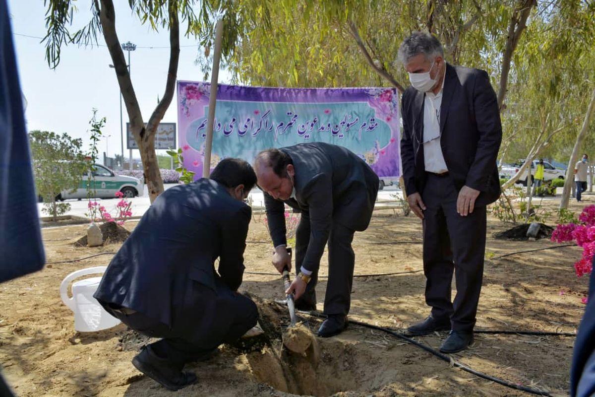 توزیع رایگان بیش از 2 هزار اصله نهال به مناسبت روز درختکاری در قشم