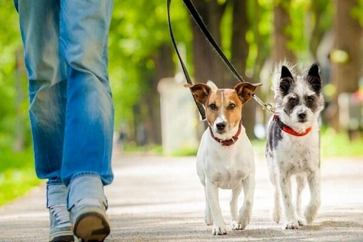 پارک یا توالت عمومی سگها؟