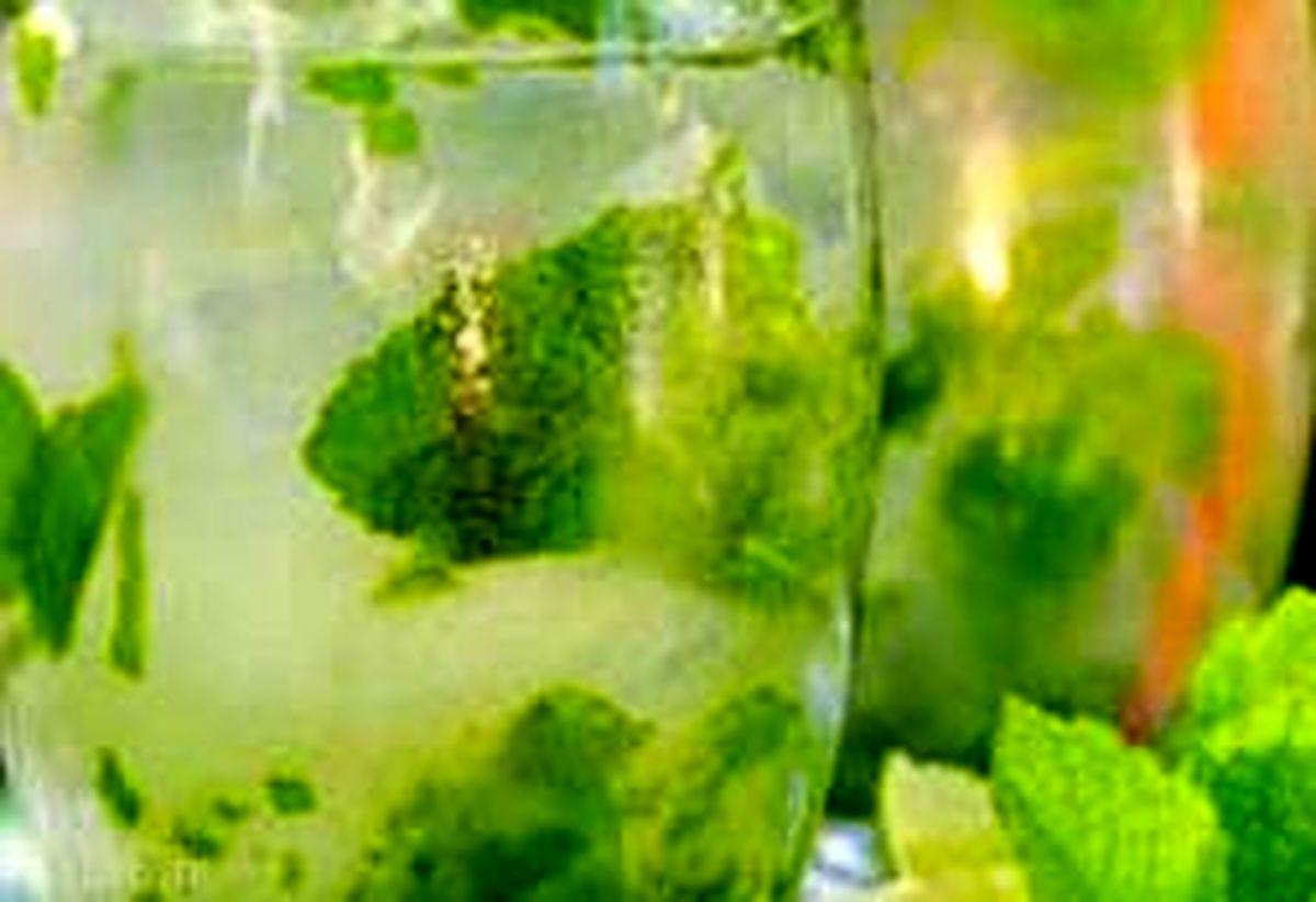 نوشیدنی سبز رنگی که در وهله اول شما را خنک و پس از آن شاد می کند