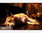 کسی که فیلم سگ کشی را منتشر کرده به زندان می رود
