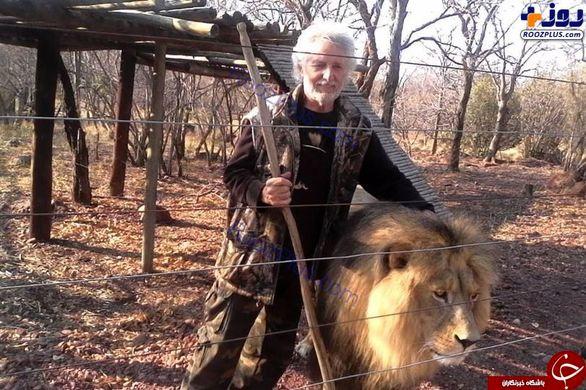 حمله ناگهانی شیرها به صاحبشان در داخل قفس +تصاویر