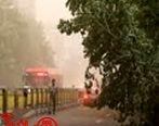 طوفان تهران را درنوردید؛ باران هوا را تازه کرد