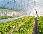 تصویب 1000 هکتار طرح گلخانه ای با حمایت بانک کشاورزی در سال 1398