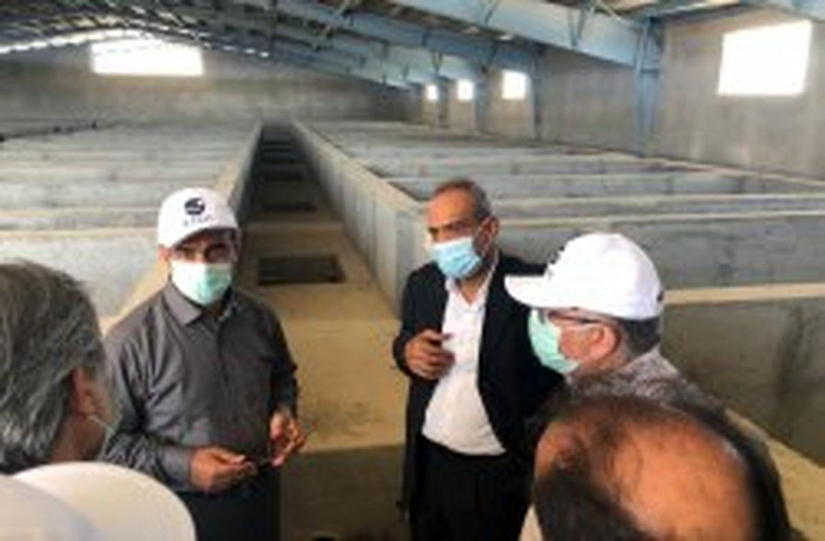 تدارک راه اندازی صنعت پرورش ماهی در قفس در جزیره کیش