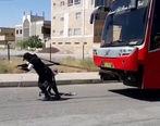بانوی سیرجانی موفق به کشیدن اتوبوس 18 تنی شد + فیلم