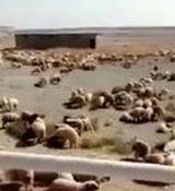 فرود اضطراری هواپیمای حامل دام زنده در فرودگاه امام خمینی(ره) + فیلم
