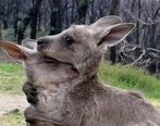 جزئیات اتش سوزی در استرالیا + تصاویر