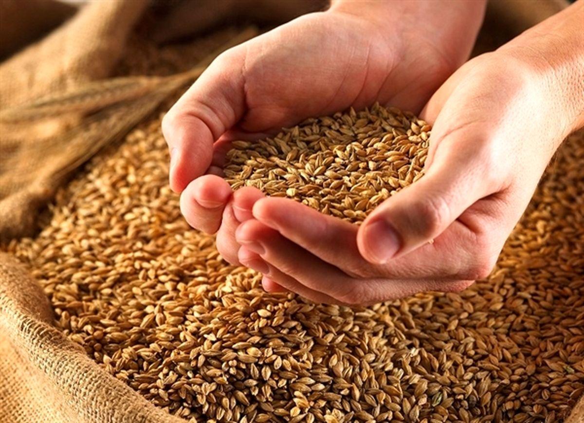 واریز وجوه خرید تضمینی گندم به حساب کشاورزان توسط بانک کشاورزی