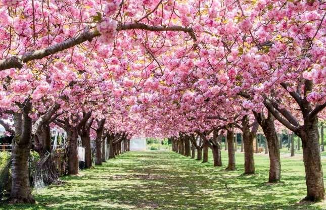 زیباترین باغهای جهان